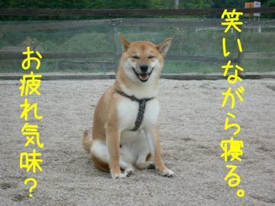 4_20100905212123.jpg