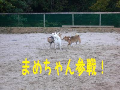 5_20091119214140.jpg