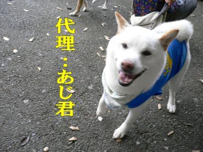 5_20100622134845.jpg