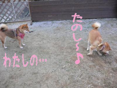 6_20091031201626.jpg