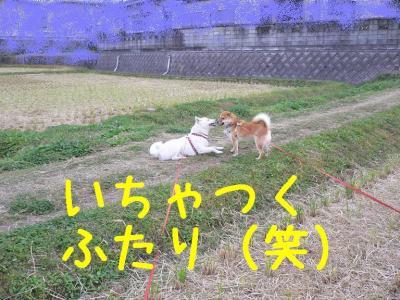 6_20091109102520.jpg