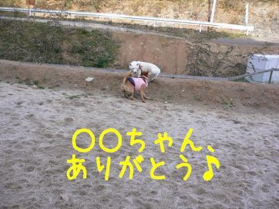 6_20091229220109.jpg