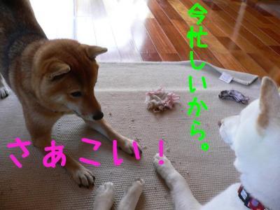 7_20091209001053.jpg