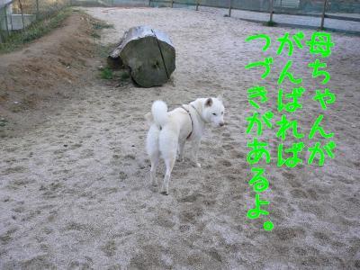 7_20091229225033.jpg