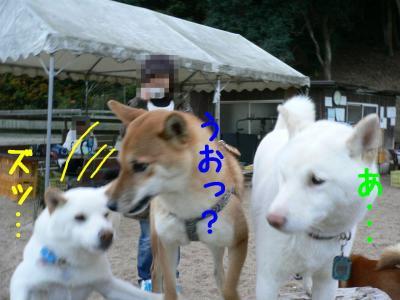 7_20101204223229.jpg