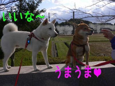 8_20091116143917.jpg