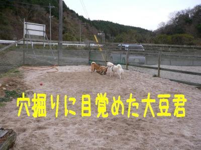 8_20100107231809.jpg