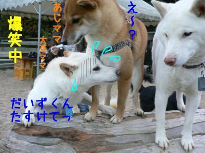 8_20101204223943.jpg
