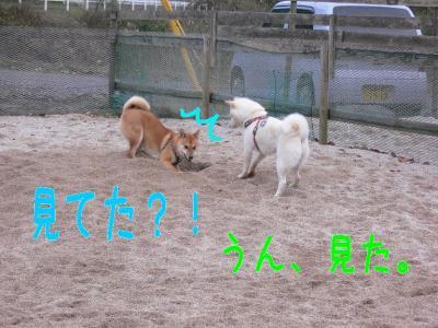 9_20100107231808.jpg
