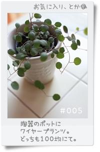 s005.jpg