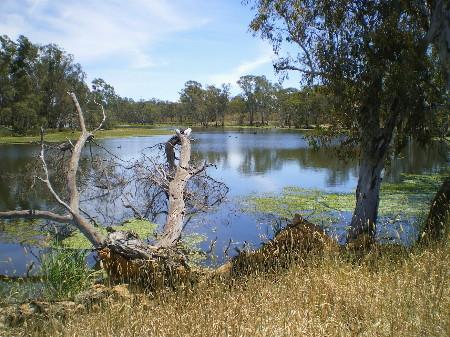 Wetland2.jpg