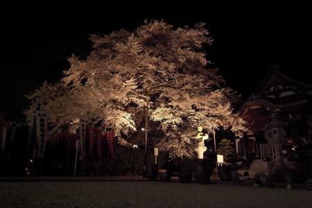 Yozakura1004a.jpg