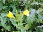 黄色の可愛いお花