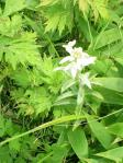 白いお花・・・名前がまるでわかりません