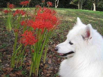 豪華な花です。
