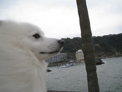 海を見るリチ君