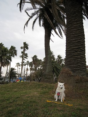 強風の小坪マリーナ