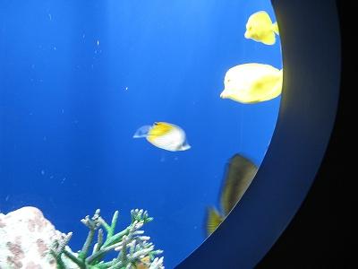 可愛いお魚
