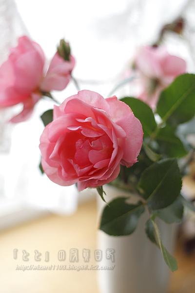09_06薔薇1