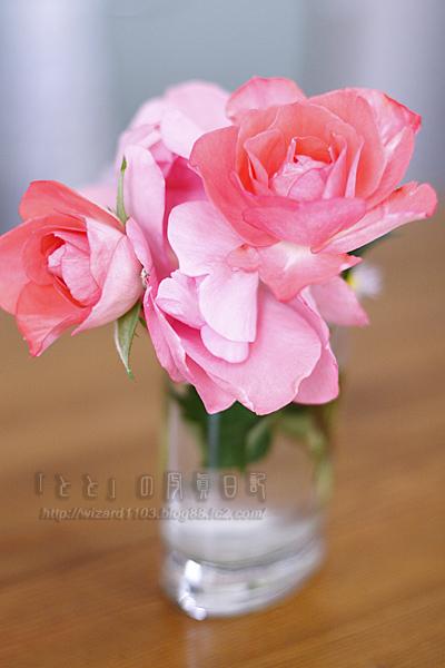 オレの薔薇2