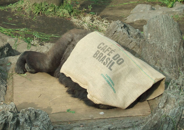 ピーコのお昼寝