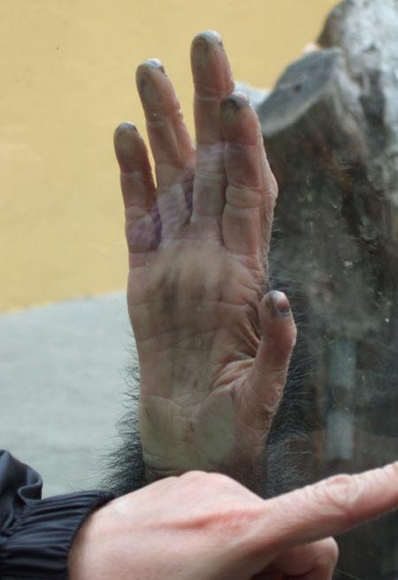 J's palm