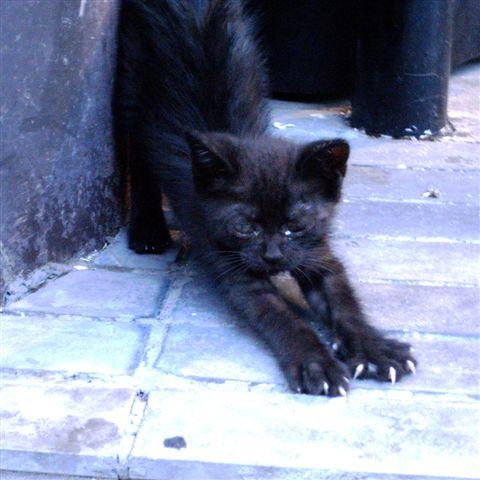 R0015593黒猫