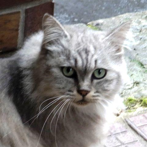 R0016121猫2