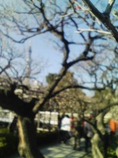 2011亀戸天神初詣一