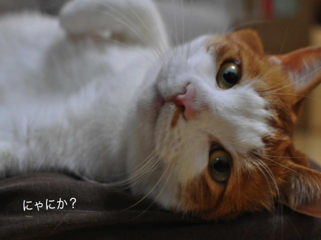 DSC_0226_convert_20101012021539.jpg