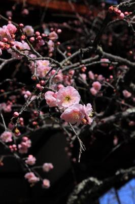 IMG_1957京都写真