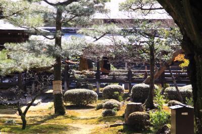 IMG_1985京都写真