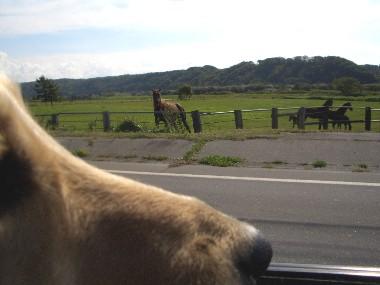 馬とロナウド