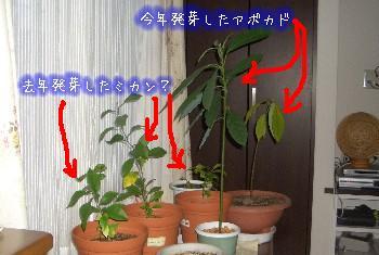 植物たち.JPG