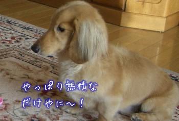 無精者.jpg