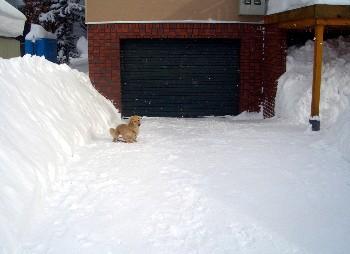 車庫の前.jpg