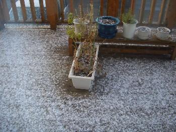 2011初雪.jpg