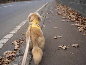 ロナウド散歩.jpg