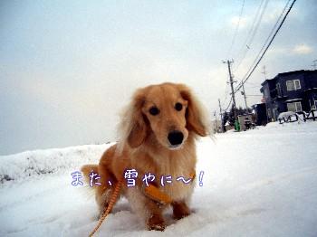 また雪やに.jpg