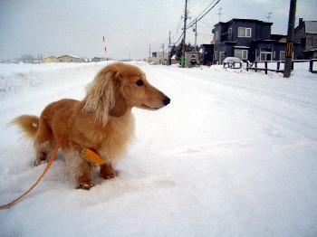 ロナウドと雪.jpg