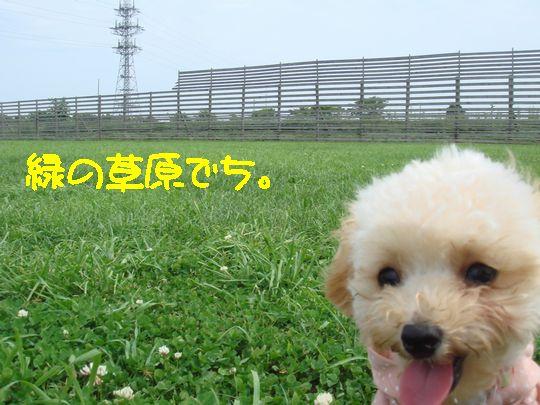 草原でち。