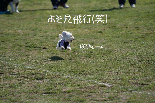こつぶ 飛行犬