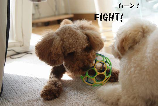 fight!.jpg