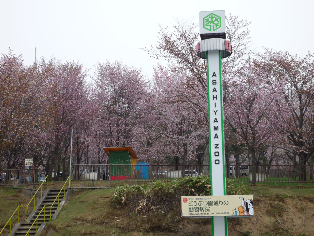 08GW北海道080430_29