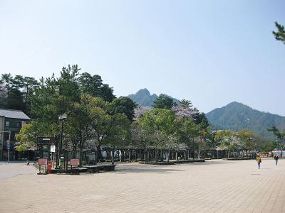 桜咲く宮島 (2)