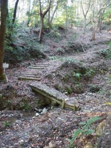 2009-01-25-022.jpg