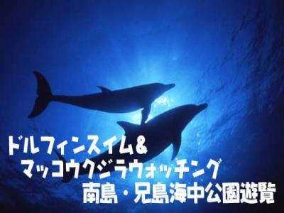 title_dolphinmakko縮