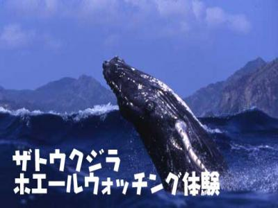 title_whalewatching1縮