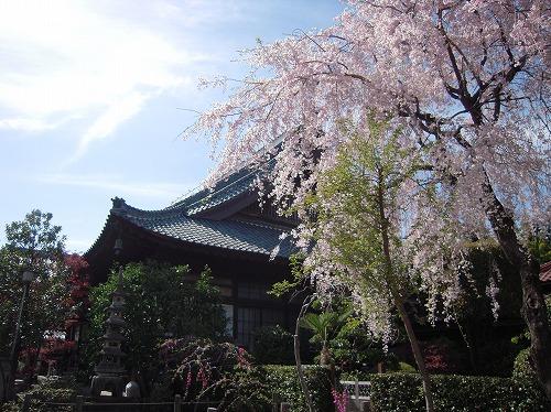さくら 2011-2