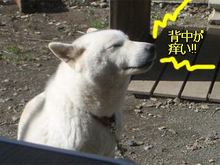ゆきちゃん